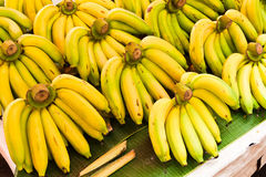 Rows of Yellow bananas Royalty Free Stock Images