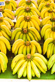 Rows of Yellow bananas Royalty Free Stock Photography