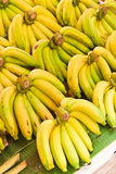 Rows of Yellow bananas Stock Photography