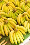 Rows of Yellow bananas Stock Photography