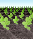 Rows of young green plants Stock Photography