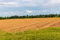Rows of young lettuce plants on farm field. Stock Photos