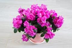 Różowy azalii i róży stojak na podłoga w pokoju Fotografia Stock