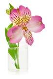 Różowy leluja kwiat w wazie Obraz Stock