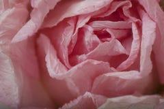 Różowy papier Wzrastał Zdjęcia Stock