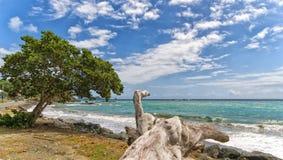 Roxborough tropisk strand och hav - Tobago tropisk ö Royaltyfri Fotografi