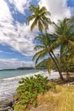 Roxborough tropisk strand och hav - Tobago tropisk ö Royaltyfri Foto