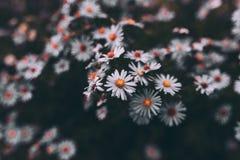 Roxo da flor Foto de Stock Royalty Free