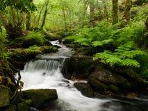 Roxos river near Compostela royalty free stock photo