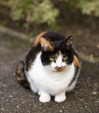 Roxy Cat. Arkivbild