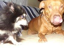 Roxy y diesel Foto de archivo