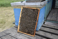 Roy bin på vaxhårkammar Bihonungskaka, planka med honungskakan från bikupan biet detailed honung isolerade makroen staplade mycke Royaltyfri Bild