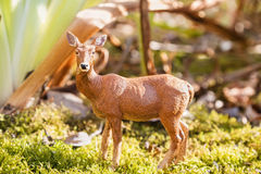 Roy deer in summer forest Royalty Free Stock Photography