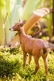 Roy deer in summer forest Royalty Free Stock Images