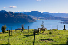 Roy peaks, New Zealand Stock Image