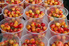 Royal ann cherries Stock Photos