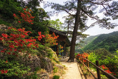 Royal Azalea and Buddhist Shrine Royalty Free Stock Image