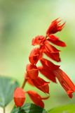 Royal Botanic Gardens. Different types of flowers Royalty Free Stock Images