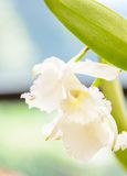 Royal Botanic Gardens. Different types of orchids Royalty Free Stock Image