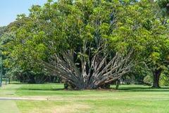 Royal Botanic Gardens in Sydney, Australia Royalty Free Stock Photography