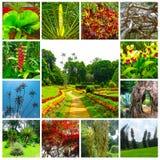 Royal Botanical garden Peradeniya. Sri Lanka. Royal Botanical garden Peradeniya at Sri Lanka. Collage Royalty Free Stock Image