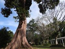 Royal Botanical garden Kandy Sri Lanka, clear Sunny day, in green trees royalty free stock photography