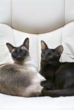 Royal cat family Royalty Free Stock Photography