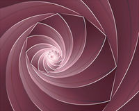Royal cornucopia swirl shell Stock Photography