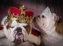 Royal couple Royalty Free Stock Photo