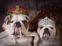 Royal couple Royalty Free Stock Image