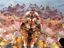 Royal crab. The royal crab close up Stock Photography