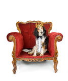Royal dog stock images
