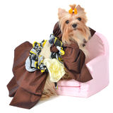 Royal dog with beautiful dress Royalty Free Stock Photo