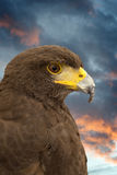 Royal Eagle´s head. royalty free stock photos
