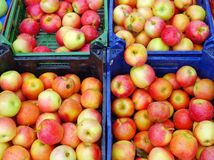 Royal Gala Apples royalty free stock images
