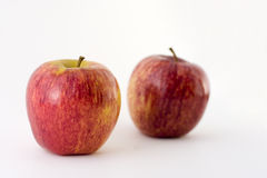 Royal Galas. Royal Gala apples on a white background Stock Photography