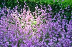 Royal garden Stock Images