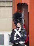 Royal guard at Amalienborg Palace, Copenhagen Denmark Royalty Free Stock Photos