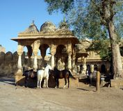 Royal horses in Jaisalmer, India Royalty Free Stock Photos