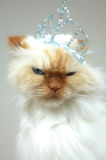 Royal Kitty. Cat with crown on head gives very mad expression. I hate you expression. Lexus the cat Stock Image