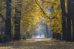 Royal Lazienki Park in autumn time Royalty Free Stock Images