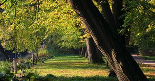 Royal Lazienki Park in Warsaw, Poland stock video