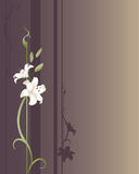Royal Lilies. Two white lilies growing on a purple and gold designed background. Plenty of copyspace Stock Image