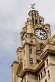 Royal Liver Building. The Royal Liver Building (pronounced /'la?v?r/) is a Grade I listed building located in Liverpool, England. It is sited at the Pier Head Stock Photo