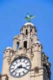Royal Liver Building Clock Tower, Liverpool. The Royal Liver Building clock tower and Liver Bird at Pier Head, Liverpool, Merseyside, England, UK, Western royalty free stock photos
