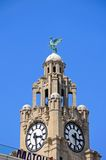 Royal Liver Building Clock Tower, Liverpool. Royalty Free Stock Photography