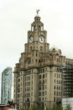 Royal Liver Building Liverpool. From front view Royalty Free Stock Photography