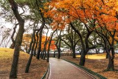 Royal mounds in daereungwon. A small pathway among the royal mounds in daereungwon, gyeongju, south korea Stock Images