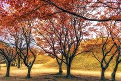Royal mounds with autumn foliage. Royal mounds of daereungwon under the autumn foliage. Gyeongju, South Korea Royalty Free Stock Photo