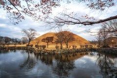 Royal mounds reflection. S on a small pond in daereungwon, gyeongju, south korea Stock Photos